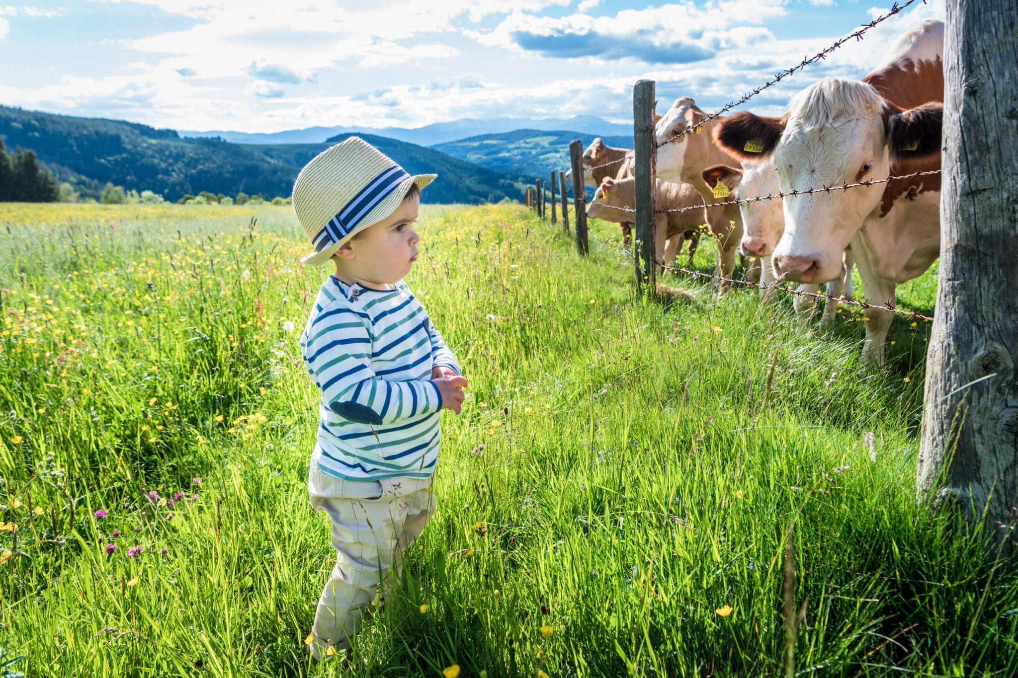 Junger Mann bei den Kühen