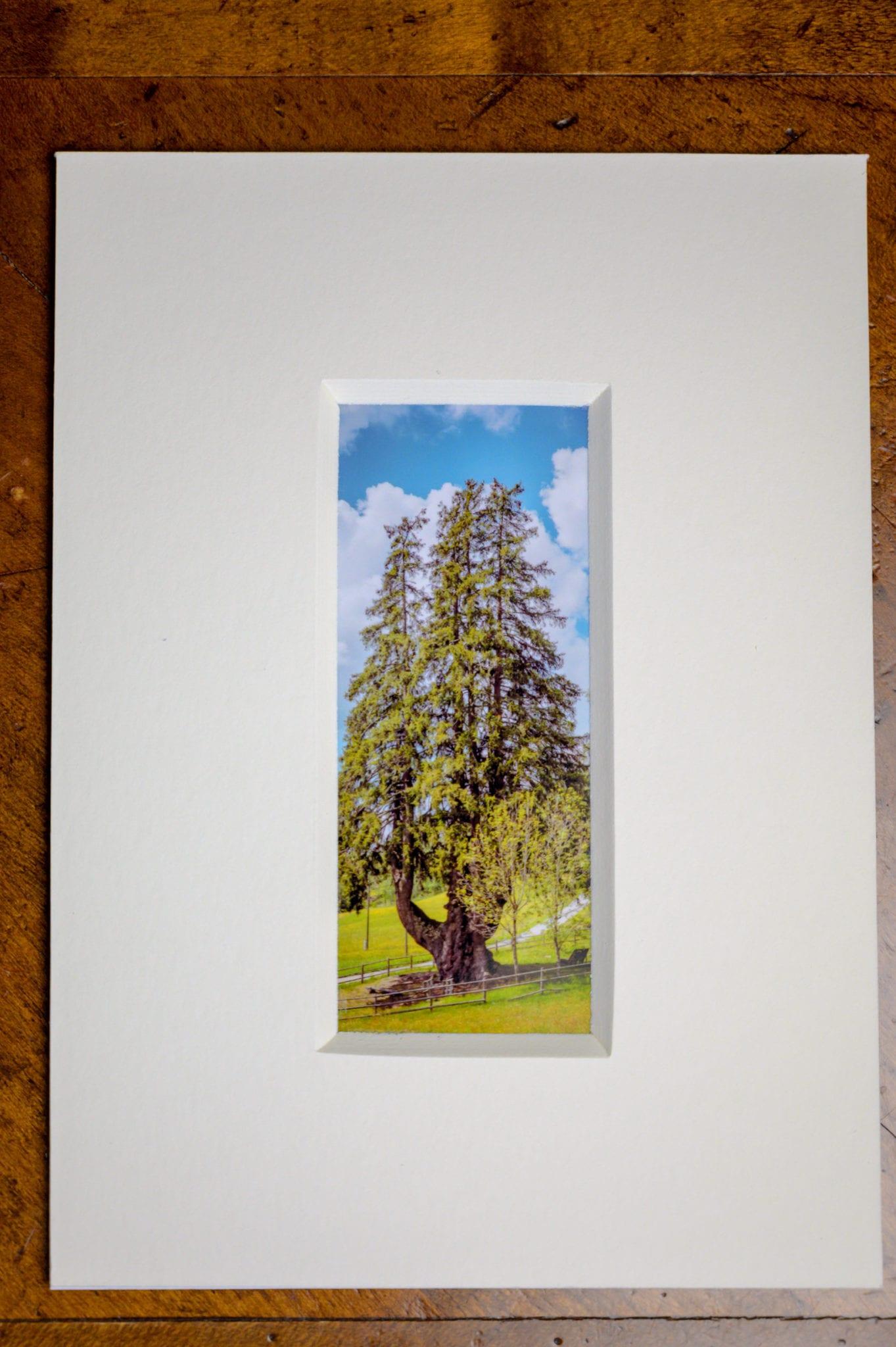 Roland Photography - der Baum