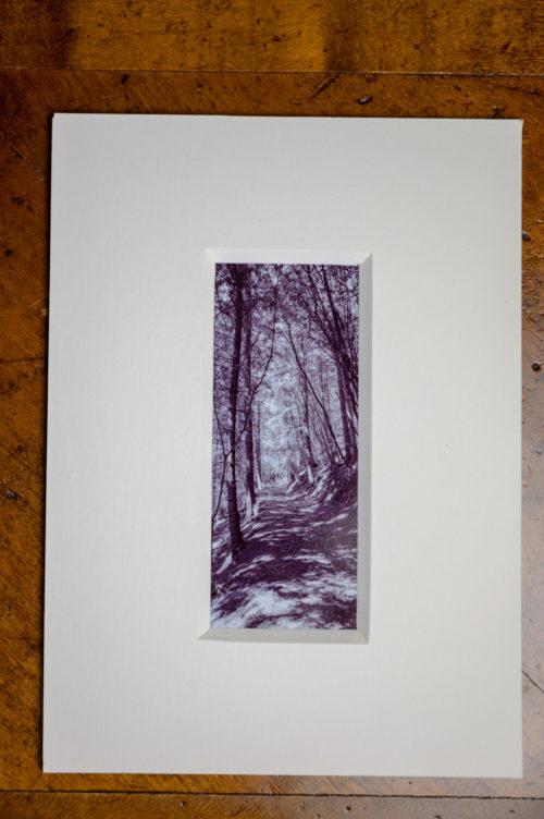 Roland Photography - im Wald