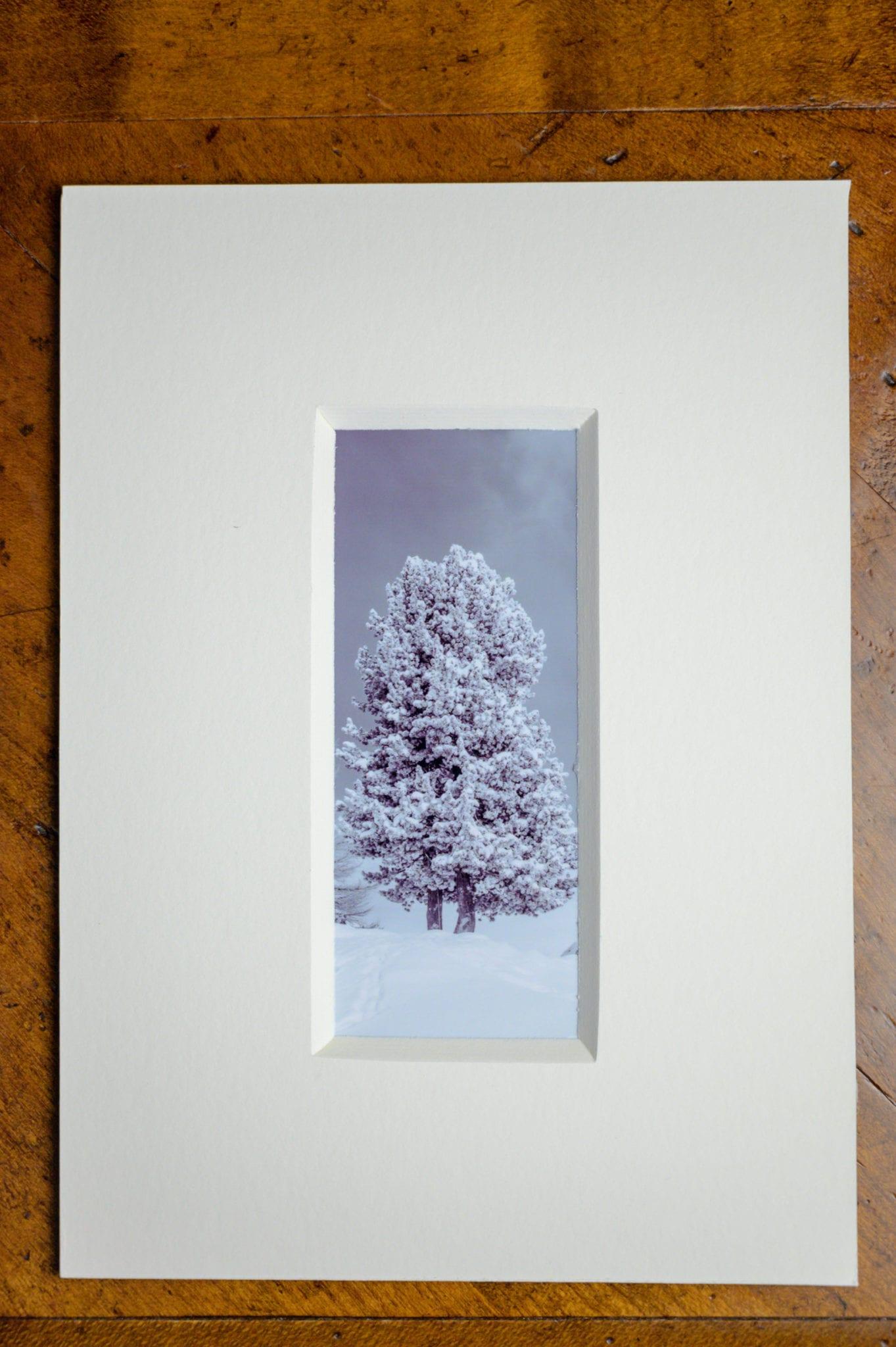 Roland Photography - Baum im Schnee